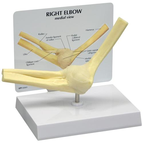 Basic Elbow Model, 1019516, Joint Models
