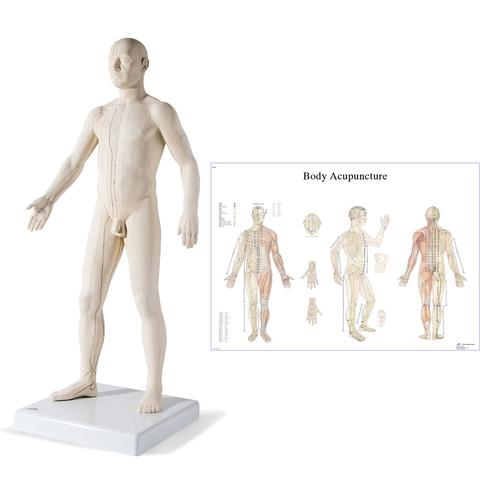 Male Acupuncture model with body chart