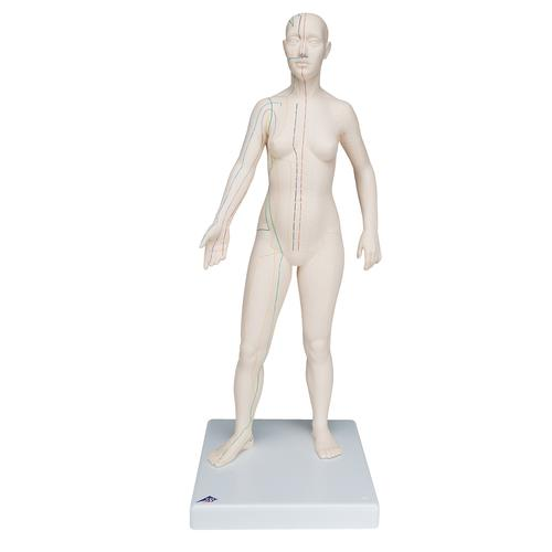 Female Acupuncture model with body chart, 3011921, Acupuncture Charts and Models