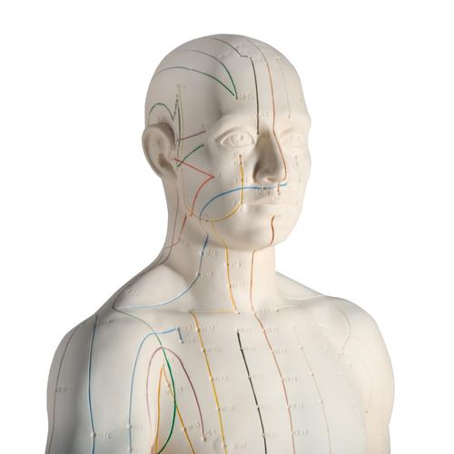 Male Acupuncture model, left ear, and ear chart, 3011931, Acupuncture Charts and Models