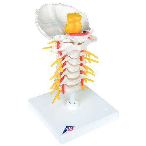 Cervical Spinal Injection Kit, 8000891 [3011957], Simulation Kits
