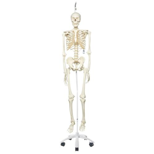 A10/1: Skeleton Model- Stan - Hanging Stand