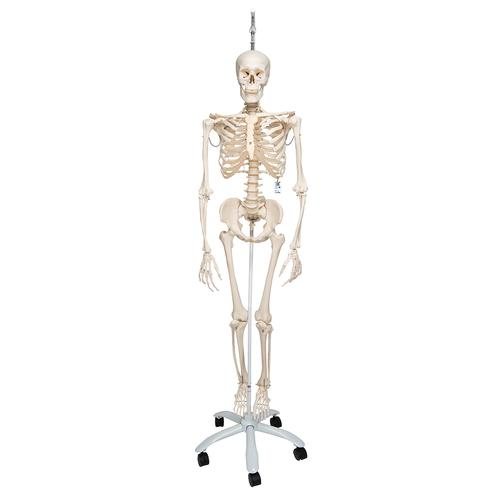 human skeleton labeled. Physiological Human Skeleton