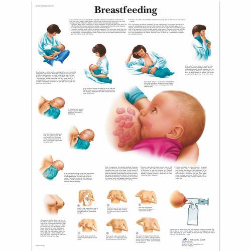 Breastfeeding Chart - 4006706 - VR1557UU - Pregnancy and ...