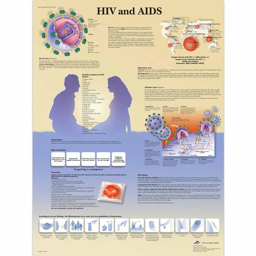HIV and AIDS Chart, 4006722 [VR1725UU], Sex Education