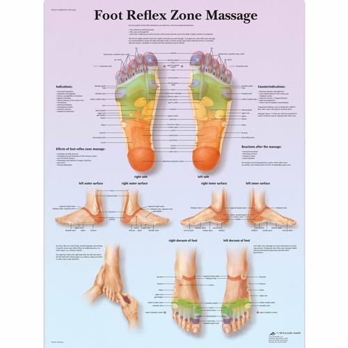 Anatomical Charts And Posters Anatomy Charts Foot Reflex Zone
