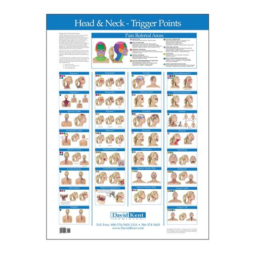 Trigger Point Chart Head And Neck W41172hn Therapy Books
