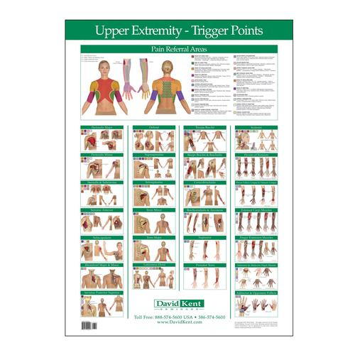 Trigger Point Chart Upper Extremity W41172ue Therapy Books
