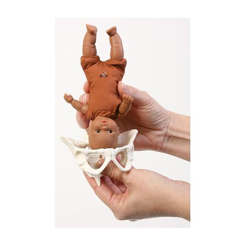 Mini Model Set: Pocket Uterus, Baby, and Pelvis (6 Pieces), 1018407 [W43092], Pregnancy and Childbirth Education