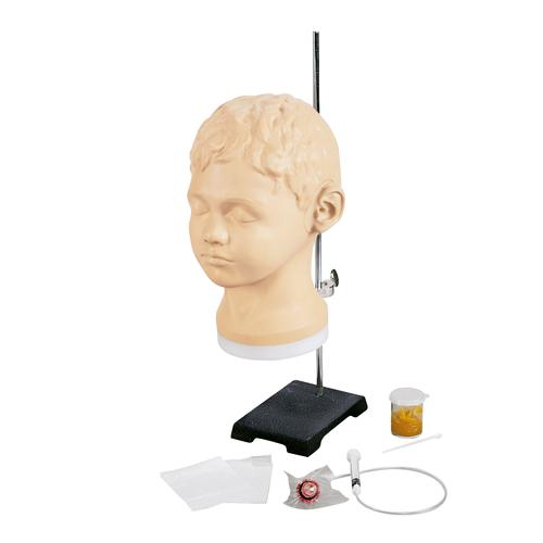 Diagnostic and Procedural Ear Trainer, 1017258 [W44747], Ear, Nose and Throat Examination