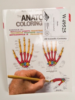 Anatomy Coloring Book - W49525 - 64550168 - Anatomy Posters ...