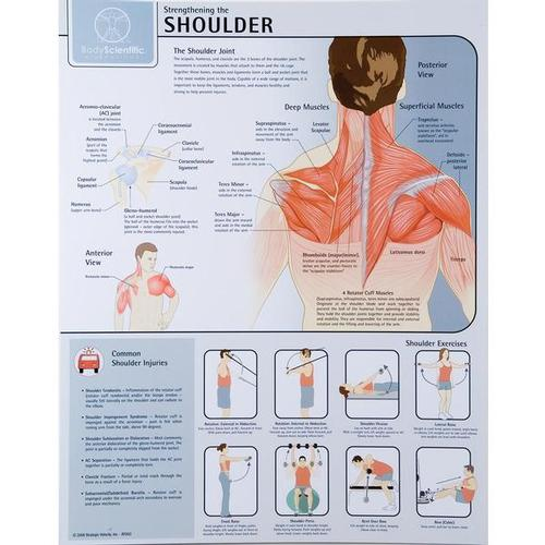 Strengthening the Shoulder Joint Chart - Unlaminated, W59507, Muscle