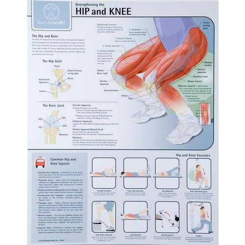 Strengthening the Hip and Knee Chart - Laminated, W59508, Muscle