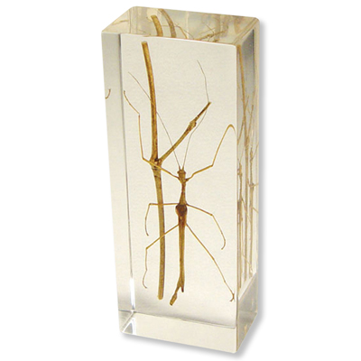 W59567: Walking Stick