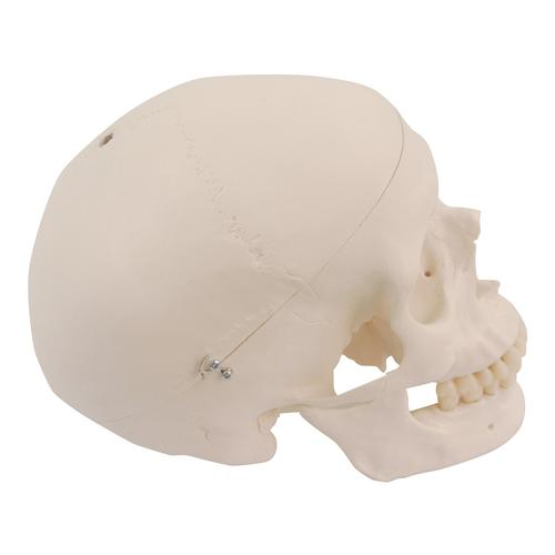 Spare skull with holes for A10, A12, A15, A15/2, A15/3 and A15/3S, 1020653 [XA022], Replacements