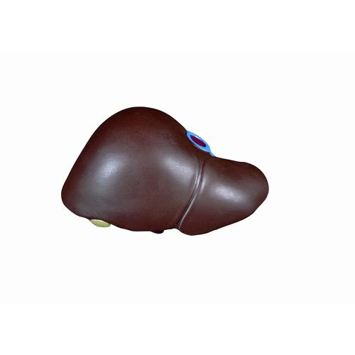 Spare liver with gallbladder, 1020671 [XB013], Replacements