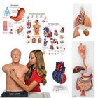 "Auscultation Training Set ""Intro"", 8000995, Simulation Kits"
