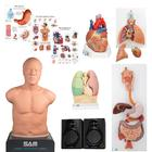 "Auscultation Training Set ""Advanced Lab"", 8000996, Simulation Kits"