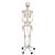 Skeleton Model - Stan, 1020171 [A10], Skeleton Models - Life size (Small)