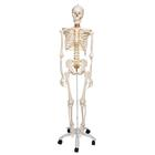 Flexible Skeleton Model - Fred, 1020178 [A15], Skeleton Models - Life size