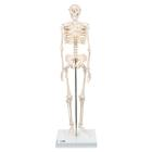 Mini Skeleton - Shorty - mounted on a base, 1000039 [A18], Mini Skeleton Models