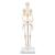 Mini Skeleton - Shorty - mounted on a base, 1000039 [A18], Mini Skeleton Models (Small)