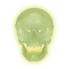 Glow in the Dark Skull Model,A20/N