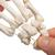 Human Hand Skeleton Model, Loosely on Nylon String - 3B Smart Anatomy, 1019368 [A40/2], Arm and Hand Skeleton Models (Small)