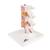 Deluxe Human Osteoporosis Model (3 Vertebrae with Discs ), Removable on Stand - 3B Smart Anatomy, 1000153 [A78], Vertebra Models (Small)