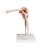 Functional Shoulder Joint, 1000159 [A80], Joint Models (Small)