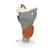Functional Larynx Model, 2.5 times Full-Size - 3B Smart Anatomy, 1013870 [G20], Ear Models (Small)