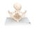 Childbirth Demonstration Pelvis Skeleton Model with Fetal Skull - 3B Smart Anatomy, 1000334 [L30], Pregnancy Models (Small)