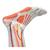 Muscle Leg, 9 part, 3/4 Life Size, 1000351 [M20], Muscle Models (Small)