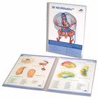 3B Student Anatomy Software