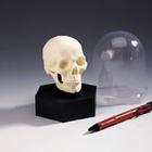 Desktop Mini-Skull,T11004