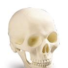 Desktop Mini-Skull, 1002500 [T11005], Geek Gifts