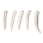 Tooth Types of Different Mammals (Mammalia), 1021044 [T300291], Comparative Anatomy