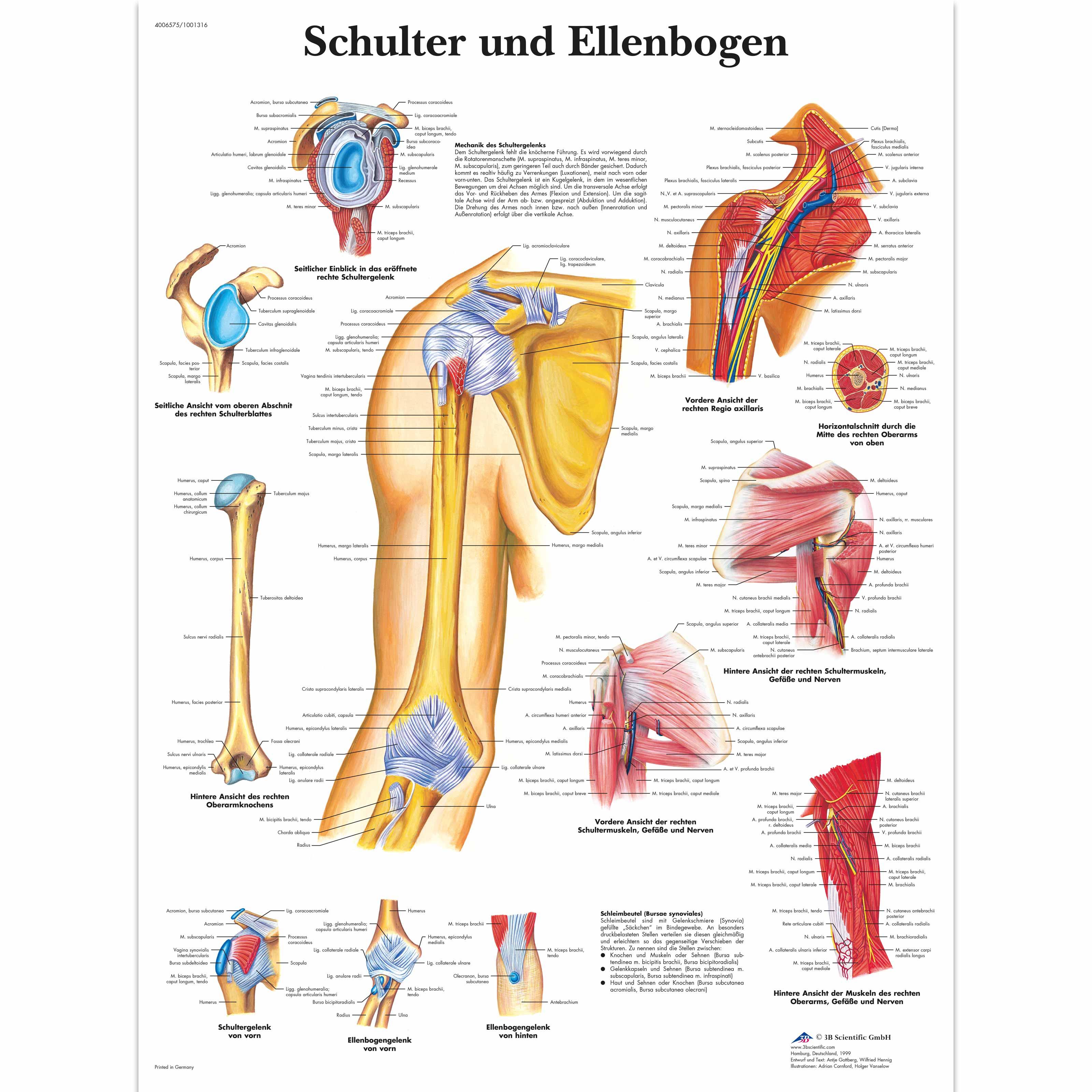 Charmant Anatomie Und Physiologie Fsu Bilder - Menschliche Anatomie ...