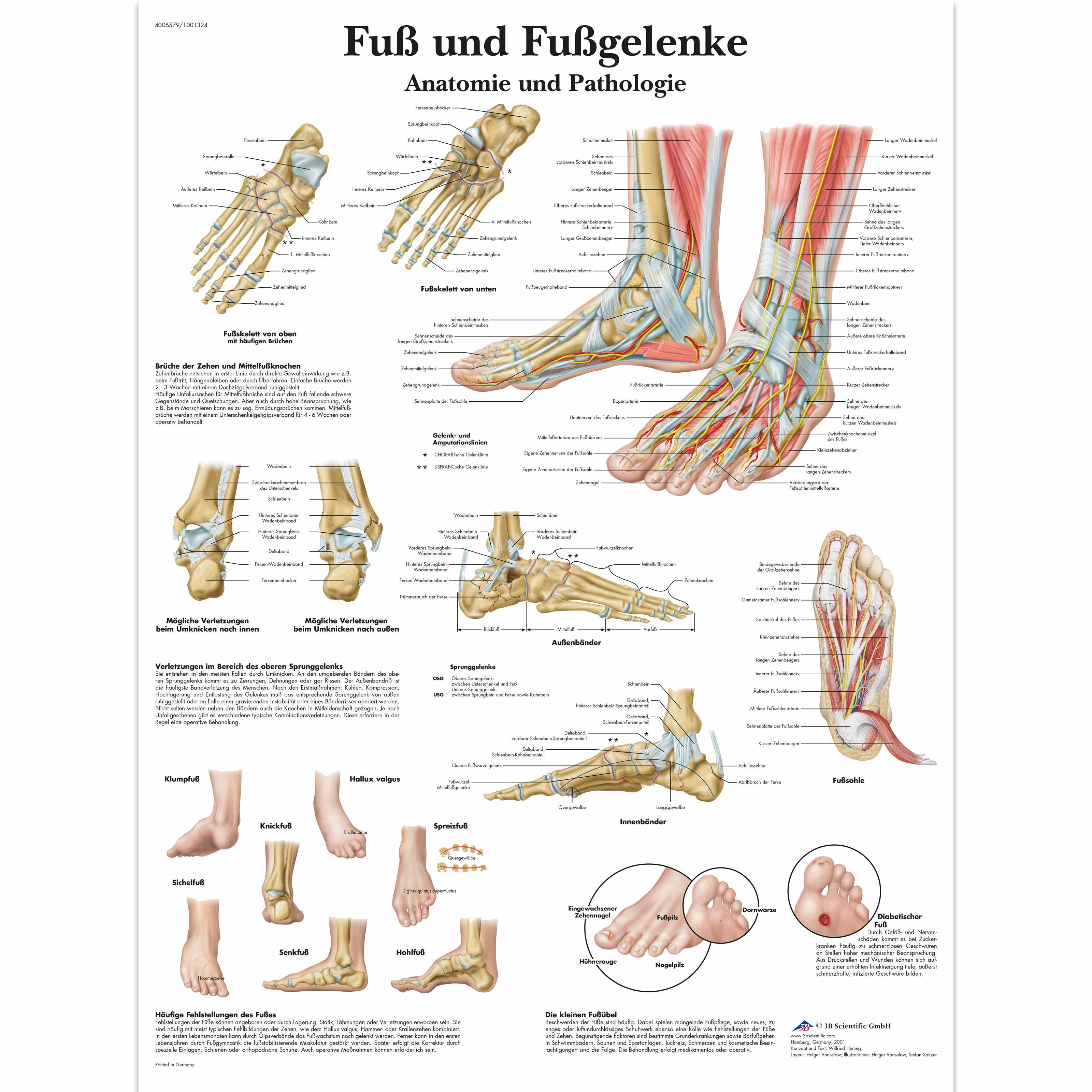 Nett Menschliche Fuß Anatomie Bilder - Menschliche Anatomie Bilder ...