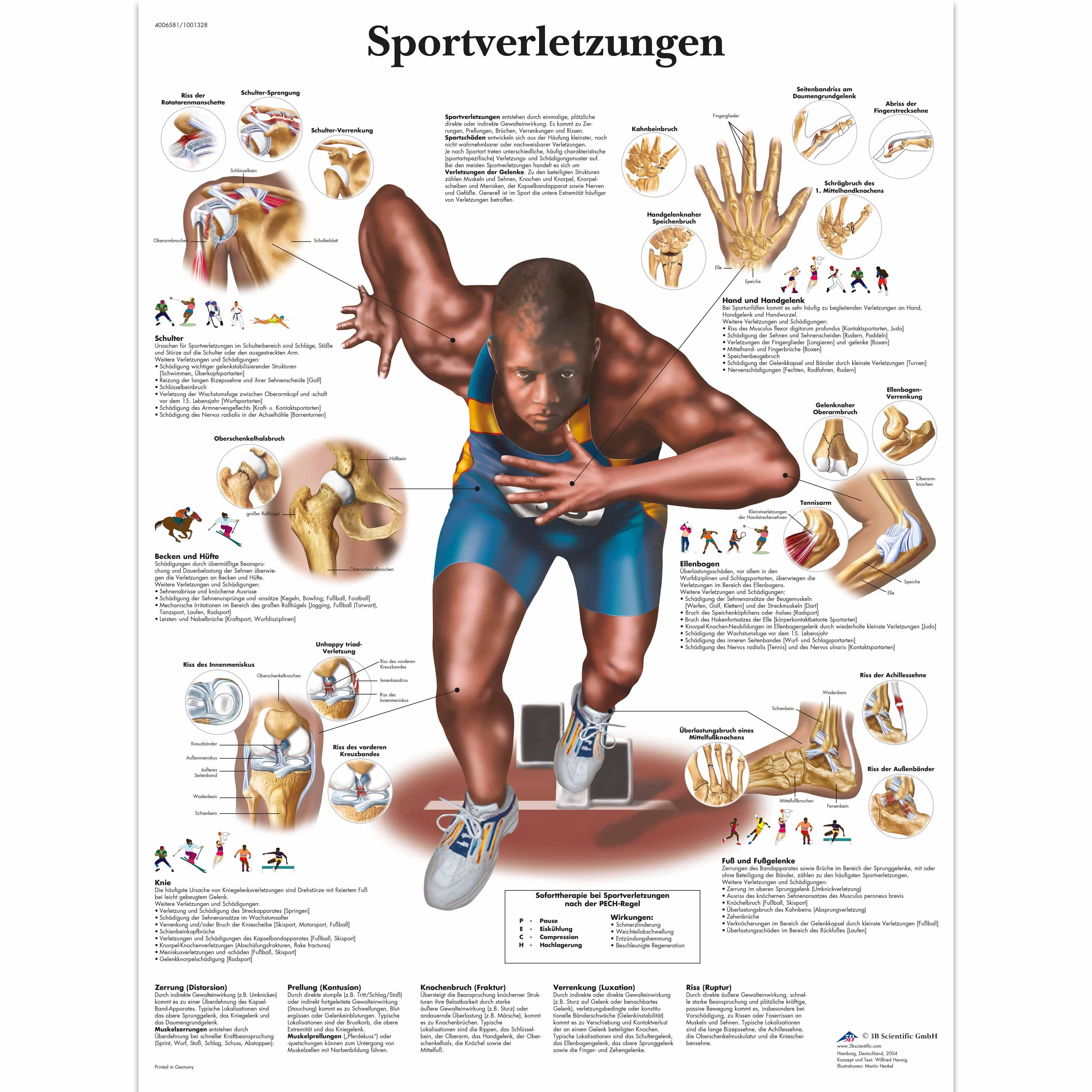 Charmant Hüftmuskel Diagramm Zeitgenössisch - Menschliche Anatomie ...