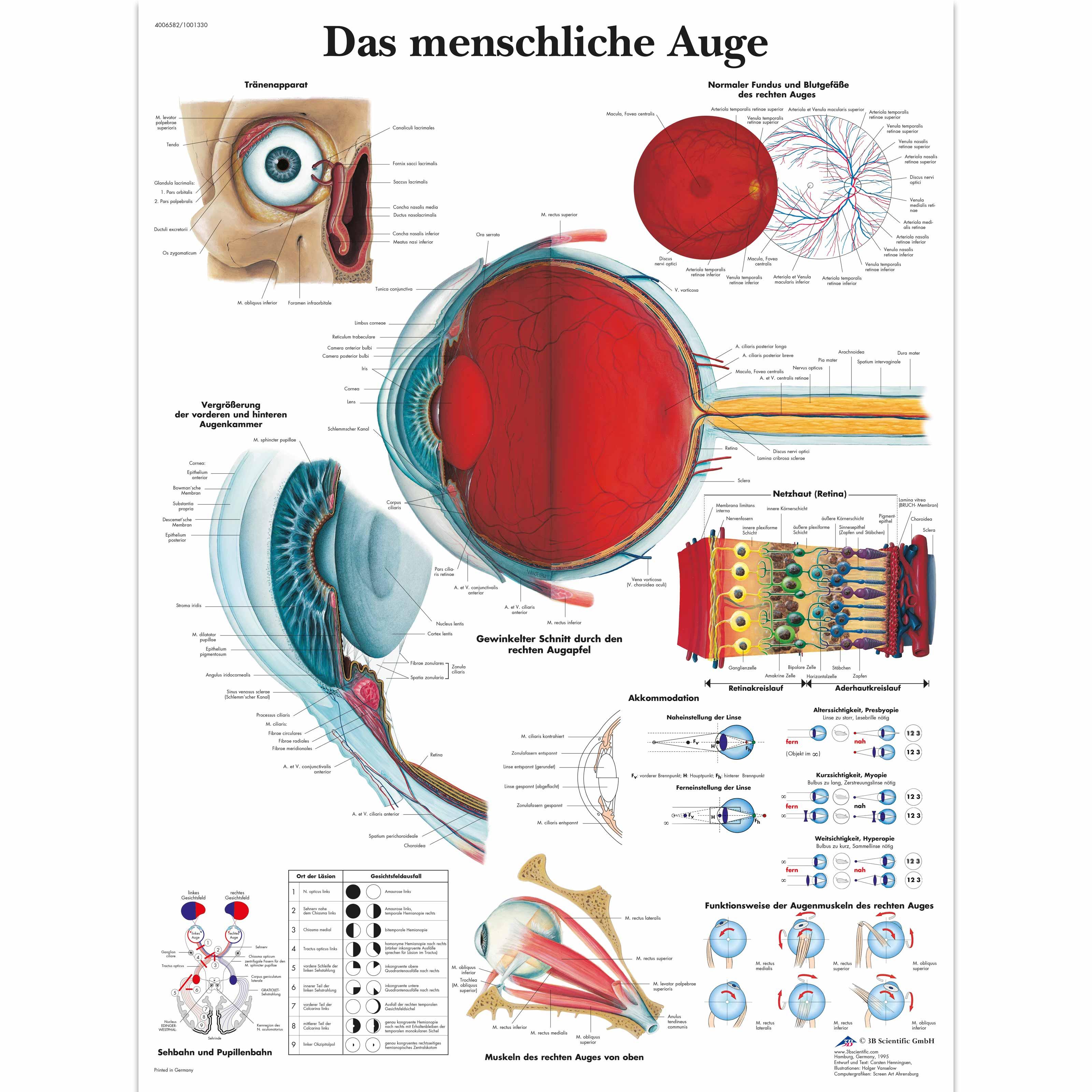 Ziemlich Menschliches Auge Anatomie Und Physiologie Bilder ...