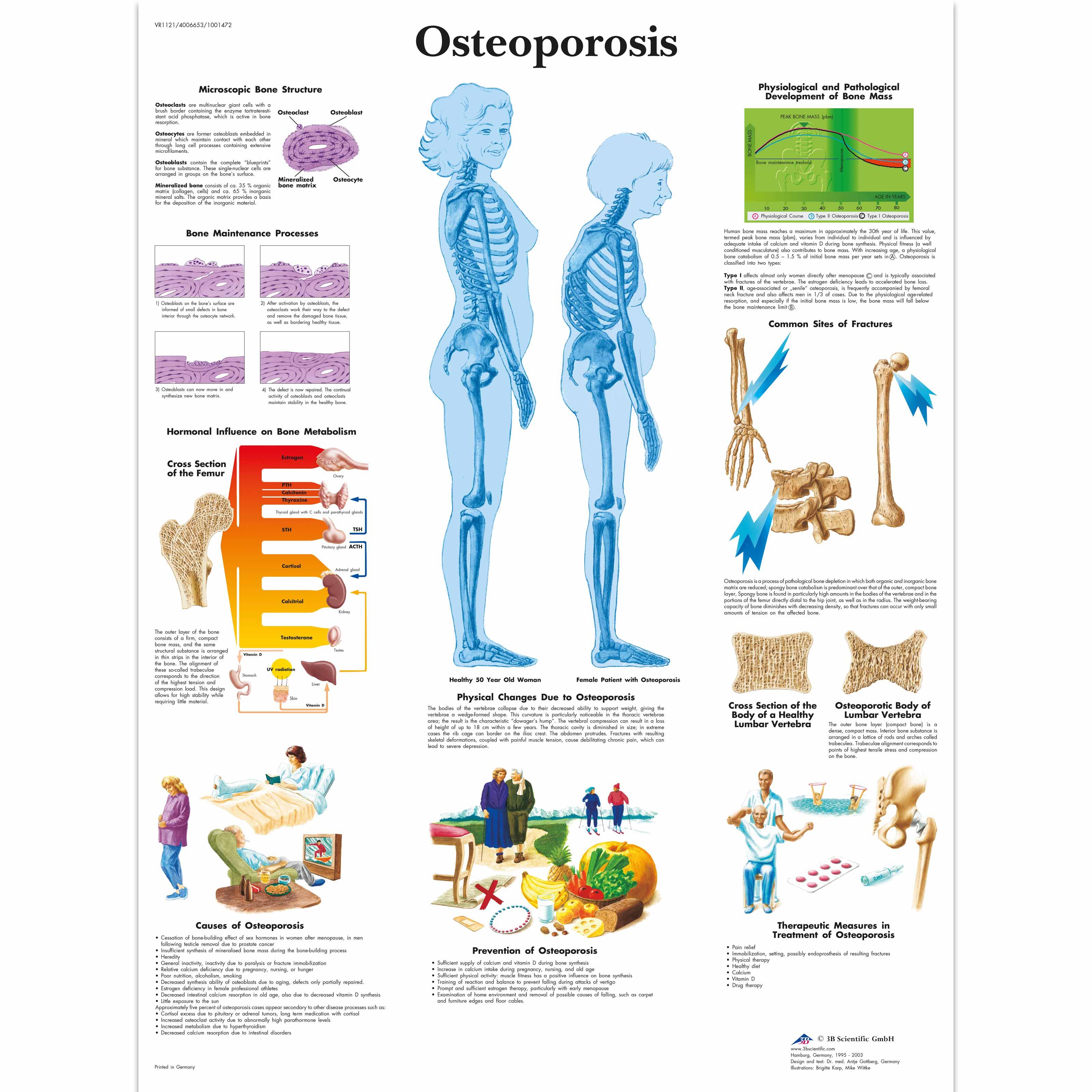 Erfreut Anatomy Posters For Sale Bilder - Menschliche Anatomie ...