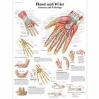 Hand and Wrist Chart - Anatomy and Pathology,VR1171L