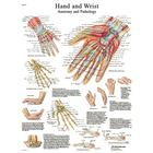 Hand and Wrist STICKYchart™, VR1171S, Skeletal System