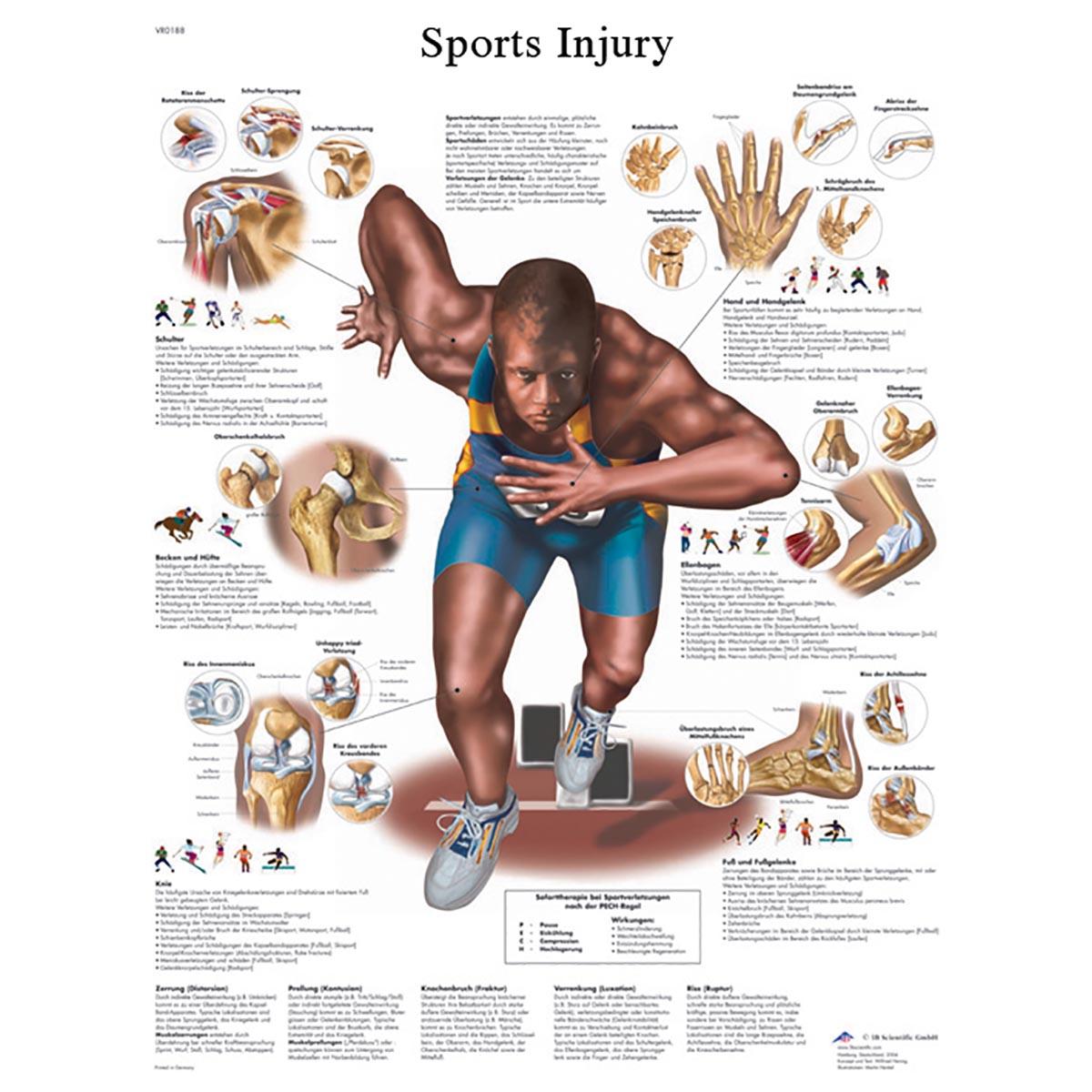 anatomy charts - Timiz.conceptzmusic.co