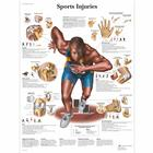 Sports Injuries Chart,VR1188UU