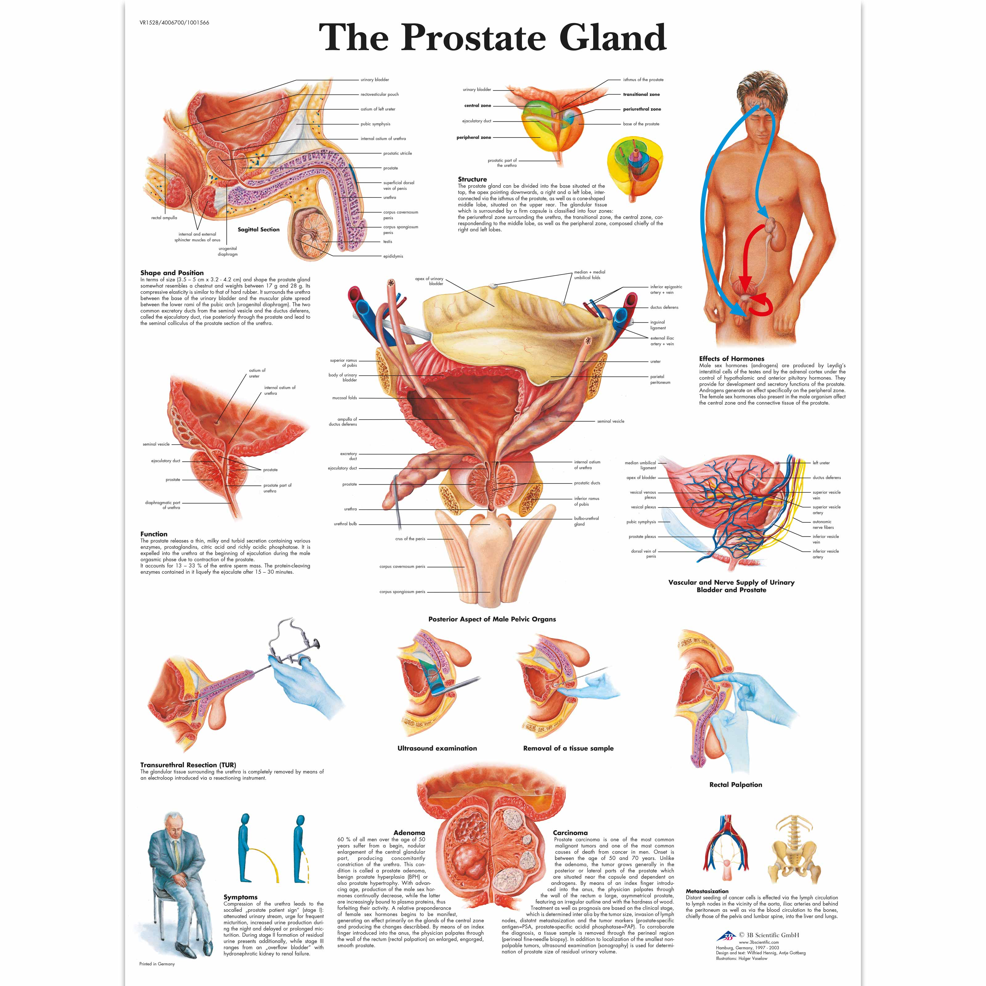 Anatomical Charts And Posters Health Education Charts Men S Health Education The Prostate