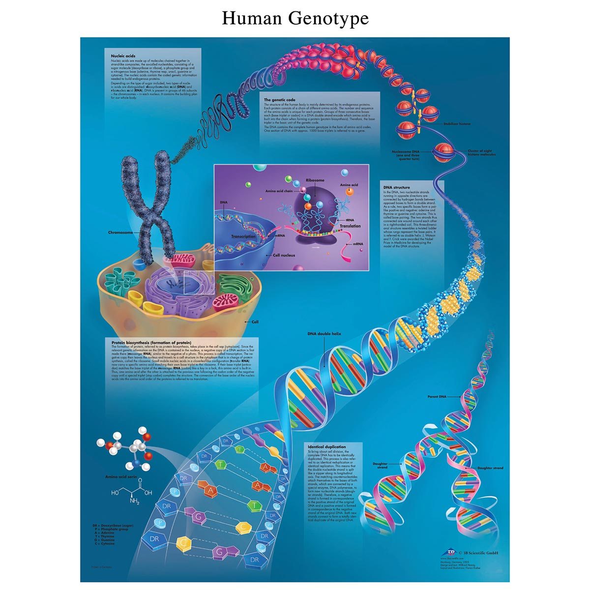 Biology Charts and Posters - Biology Charts - DNA Poster ...