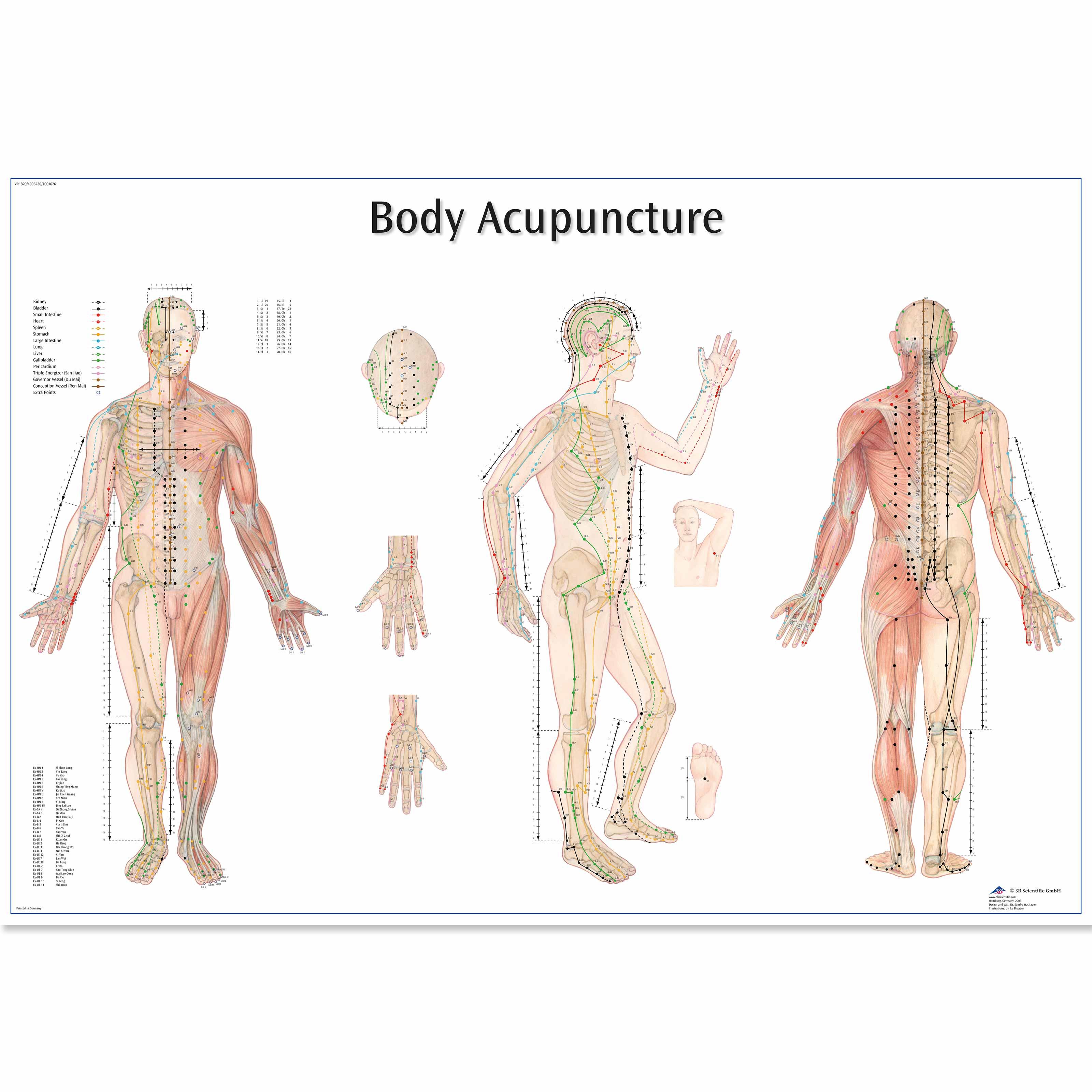 body charts - Ceri.comunicaasl.com
