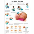 Lactancia materna, 4006868 [VR3557UU], Pregnancy and Childbirth